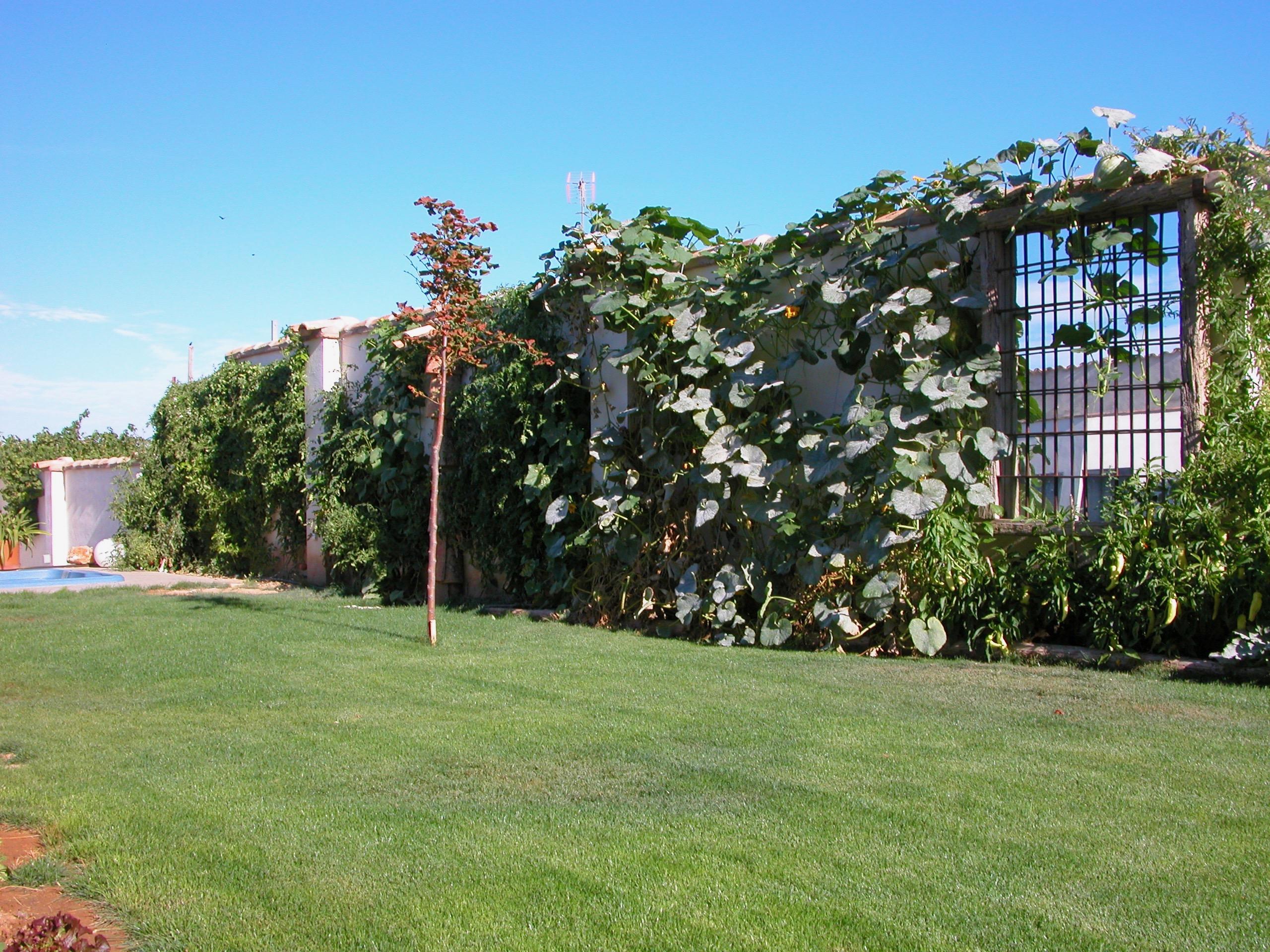 La pared de nuestro jardín
